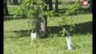 Сад мира посадили накануне праздника Победы